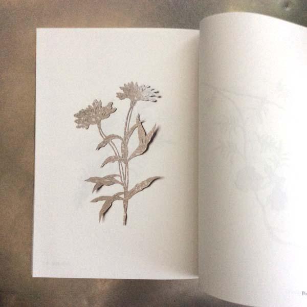 guide of plants. / odo 濱田久美子