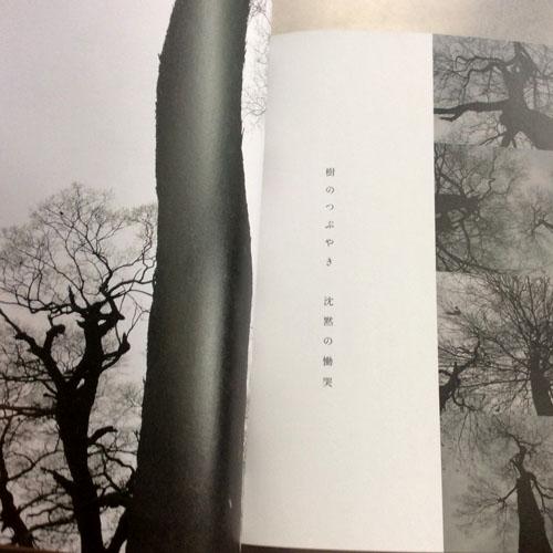 """私は私と樹のことを """"私たち""""と呼ぶ ,岸田真理子"""